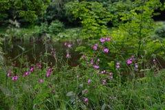 Fleurs roses à côté de la rivière photographie stock libre de droits