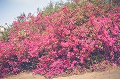 Fleurs roses à l'intérieur de fond de jardin de poissons Photos libres de droits