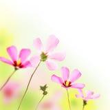 Fleurs roses Photographie stock