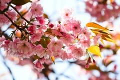 Fleurs roses Image libre de droits