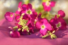 Fleurs roses Image stock