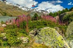 Fleurs roses alpines et montagnes neigeuses, Suisse, l'Europe Images stock