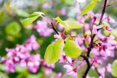 Fleurs roses - arbre de fleur Photographie stock libre de droits