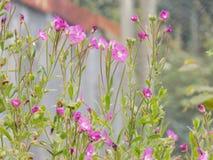 Fleurs roses au foyer Image libre de droits