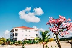 Fleurs roses avec un condominium à l'arrière-plan image stock