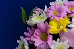 Fleurs roses, blanches et jaunes sensibles avec des feuilles Photographie stock libre de droits