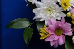 Fleurs roses, blanches et jaunes sensibles avec des feuilles Photos stock