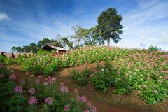 Fleurs roses colorées dans le jardin images stock