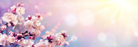 Fleurs roses contre le ciel au lever de soleil photos stock