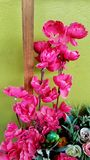 Fleurs roses décoratives pour le jardin image libre de droits