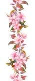 Fleurs roses d'Apple ou de cerise Cadre floral sans couture de rayure Bordure peinte par aquarelle botanique Image libre de droits