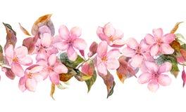 Fleurs roses d'Apple ou de cerise Cadre floral sans couture de rayure Frange peinte par aquarelle Photographie stock