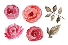 Fleurs roses d'aquarelle Photos stock