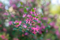 Fleurs roses d'arbre Photo stock