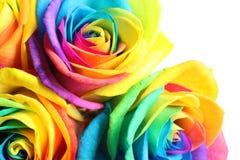 Fleurs roses d'arc-en-ciel étonnant Photo libre de droits