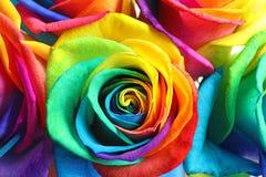Fleurs roses d'arc-en-ciel étonnant Photo stock