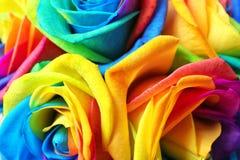 Fleurs roses d'arc-en-ciel étonnant Image libre de droits