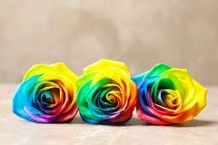 Fleurs roses d'arc-en-ciel étonnant Photos stock