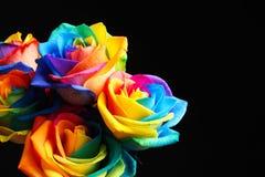 Fleurs roses d'arc-en-ciel étonnant Image stock