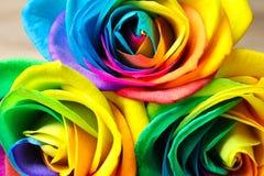 Fleurs roses d'arc-en-ciel étonnant, Photographie stock libre de droits
