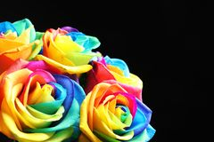 Fleurs roses d'arc-en-ciel étonnant Images libres de droits