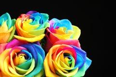 Fleurs roses d'arc-en-ciel étonnant Photographie stock libre de droits
