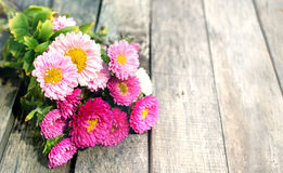 Fleurs roses d'aster Photos stock
