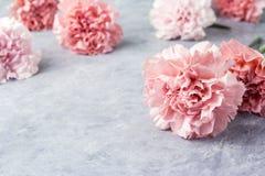 Fleurs roses d'oeillet sur le plancher de ciment Images libres de droits