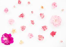 Fleurs roses d'oeillets images stock