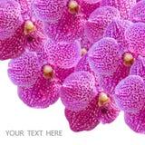 Fleurs roses d'orchidée Image stock