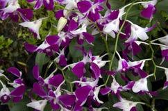 Fleurs roses d'orchidée photo stock
