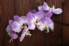 Fleurs roses d'orchidée sur le bois Images libres de droits