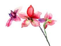 Fleurs roses d'orchidées Photographie stock