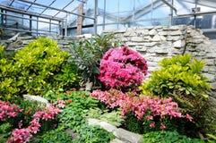 Fleurs roses dans Palmen Garten, Francfort sur Main, Hesse, allemand Photographie stock