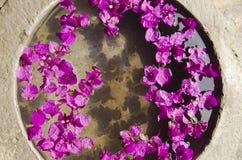 Fleurs roses dans un bac Photo stock