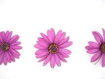 Fleurs roses dans une ligne Photos libres de droits