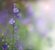Fleurs roses de Beautful Photos libres de droits
