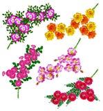 Fleurs roses de canina de Rosa de crabot Photos stock