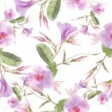 Fleurs roses de Dipladenia sur le fond blanc Configuration sans joint photos libres de droits