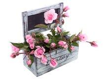 Fleurs roses de floribunda rose Photographie stock libre de droits