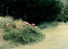Fleurs roses de fond brouillées Images stock