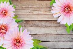 Fleurs roses de gerbera de marguerite sur le fond en bois Tons de vintage Photos libres de droits