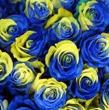 Fleurs roses de la Suède Image libre de droits