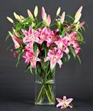 Fleurs roses de lis Photographie stock
