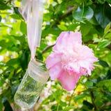 Fleurs roses de pivoine dans un pot en verre Photographie stock libre de droits