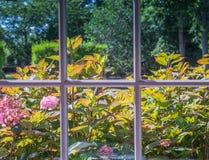 Fleurs roses de ressort en fleur Images stock