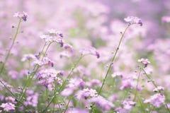 Fleurs roses de source Images libres de droits