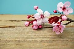 Fleurs roses de source Photo libre de droits