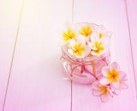 Fleurs roses de station thermale de Frangipani Photographie stock libre de droits