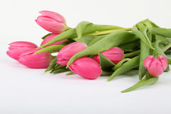 Fleurs roses de tulipe Photos stock